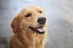 wikiHow to Introduce a Dog to a Dog Park via wikiHow.com