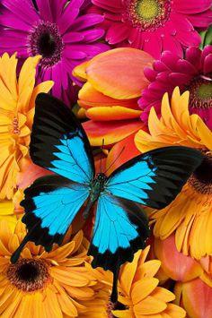 colourful,beautiful