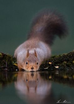 The squirrel  Great picture
