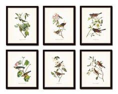 Audubon Bird Prints Set No. 1 - Vintage Bird Prints