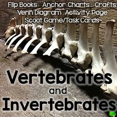 """This Unit is designed to give your students practice sorting animals with and without a backbone.  They will use anchor charts, create a cut and paste flipbook for both vertebrates and invertebrates, play """"Vertebrate or Invertebrate"""" Scoot, make a backbone craft, complete a sorting activity by coloring the vertebrates and invertebrates pages and compare vertebrates and invertebrates with a venn diagram.Please check out the preview to see what is included in this unit!You will get:Vertebrates…"""