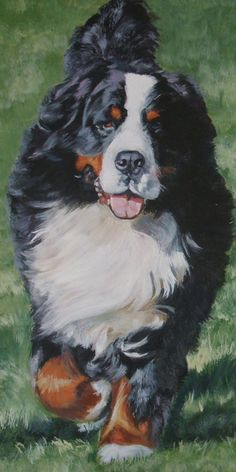 Bernese Canvas Print from The Dog Lover