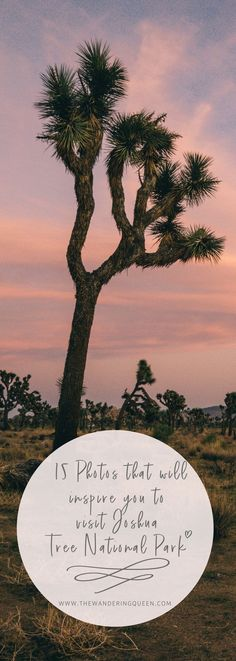 Joshua Tree National Park Pictures that will inspire you to visit. These are pictures of exploring, hiking and climbing around the majestic National Park. Joshua Tree National Park in California | Climbing | Hiking | Camping | USA |