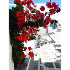 Dreaming...In the middle of the week..🌴🌺🏝  #Paros #island #holiday #vacances #sun #sea #tb #summer #instasummer #greece #instagreece #flower #nature #instagran #reasonstovisitgreece #travelling #instatravel #travelgirl #girlboss #fashionista #stylish #bloggerlife #fashionblogger #nofilter #instamood #instadaily  #styleblogger #blogger #zkstyle
