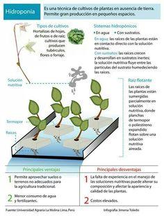 Como funcionan los cultivos hidroponicos