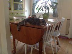 Ollie op de tafel, mijn gekke kat