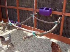 Chicken swing