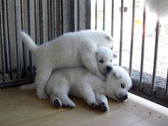 紀州犬ファイル240923-04