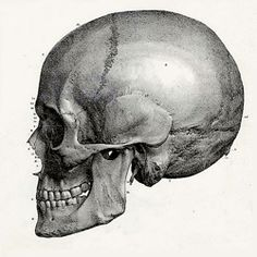 Virtual Histology | AnatomyBox
