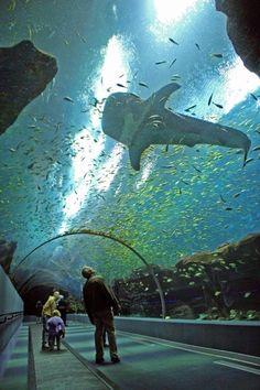 The largest aquarium in the world, Atlanta, GA.