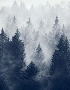 Snowy Forrest :: House of Valentina