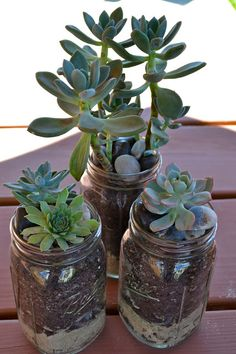 The Domestic Doozie: Mason Jar Succulent Planters