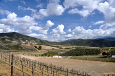Visit #Temecula! #Tours, #tastings, #food and #fun with #WineRoverTours.com