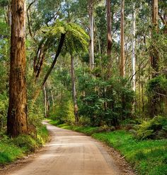 Dandenong Ranges, Victoria, #Australia #travel...only 45mins from Melbourne, such a magical place
