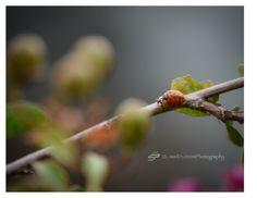 Ladybugs | Orlando Photographer| Landscape Photography| Sliwa Studios Photography