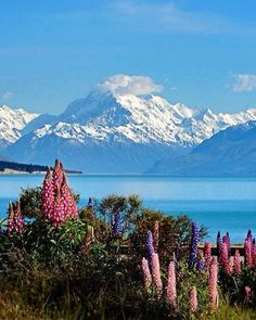 Lake Pukaki, South Island, New Zealand Places Around The World, Oh The Places You'll Go, Places To Travel, Places To Visit, Around The Worlds, Beautiful World, Beautiful Places, Landscape Photography, Nature Photography
