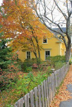 Yellow Cottage charm!