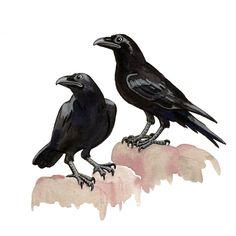 Freydís Kristjánsdóttir, guache. Huginn and Muninn, Óðin´s ravens.