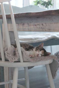 sweet dream, kitty kitty