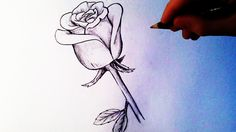 rose draw tutorial easy drawing drawings flower sketches acrylic simple realistic sketch roses pencil step california crossover paints polymer alcohol