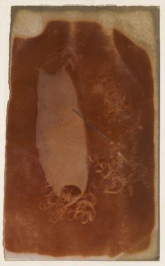 Shark Egg Case by unknown artist, 1840-45 | photogenic drawing