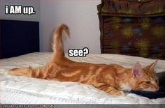 cat!!!!!!!