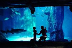 SEA LIFE London and Lunch at Planet Hollywood for Two | Activity Superstore