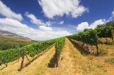 Südafrika: Stellenbosch Wein-Reisen - Rundreisen - Gruppenreisen und Individualreisen - Natürlich Reisen!