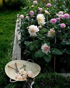 Favorite Pastime, Peonies, Dahlias, Dream Garden, Vegetable Garden, Art Inspo, Bloom, Outdoor Decor, Plants