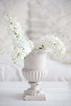 blanc d'hiver √√√