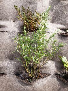 Eetbare planten gevel