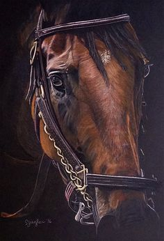 Alpha Look - American Pharoah. Original colored pencil drawing by Sue Zieglar, 2016 Fall Showcase, American Academy of Equine Art.