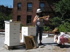 Beekeeping 101 (The First Year) – HOMEGROWN