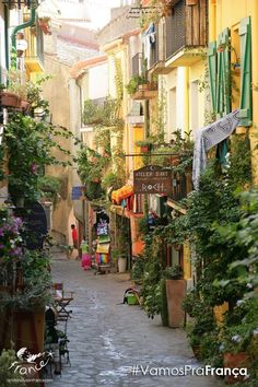 France - old cobbled narrow street with vertical  and container gardens