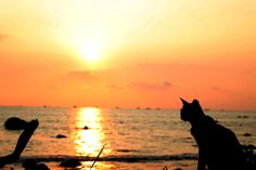 Beautiful cat and sunset! Pictures To Draw, Cool Pictures, Free Photographs, Cat Silhouette, High Resolution Photos, Cat Life, Free Stock Photos, Cats And Kittens, Seaside