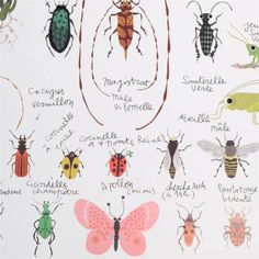 TINOU INSECTS POSTER