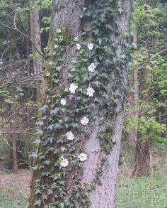 Yarn bombed tree, Valtherbos, 15 april 2014