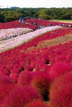 Parque (Japon)