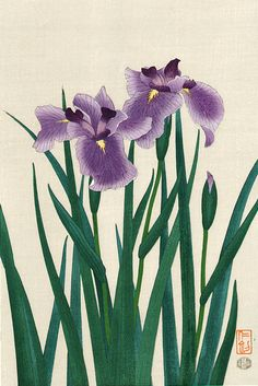 Itou Nisaburo (1910-1988) 伊藤 仁 三郎 Iris 菖蒲, 1950's Chinese Prints, Japanese Prints, Chinese Art, Japanese Art, Line Art Flowers, Iris Flowers, Flower Art, Japanese Painting, Chinese Painting