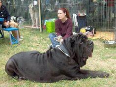 #dog or horse?