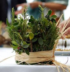 Herb Centerpieces that guests could take home as a parting gift.