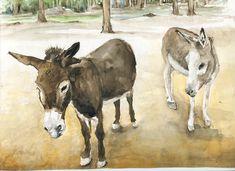 Donkey's by ~8025glome on deviantART