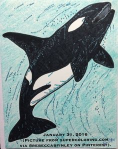 ~ January 31, 2016 ~ PROBABLY MY MOST FAVOURITE PIC SO FAR!!!! I LOVE, LOVE, LOVE how this turned out!! It's just a random orca pic I found on supercolouring.com via the Pinterest acct of @rebeccabfinley. I'm am SOOOOO thankful that she shared that pic, enabling me to find it!!