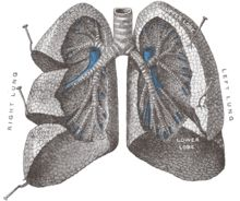 Pinner wrote: Essential Oils for Asthma, Bronchitis and Sinusitis Young Living Oils, Young Living Essential Oils, Natural Medicine, Herbal Medicine, Acupuncture, Health And Beauty Tips, Health Tips, Health Care, Essential Oils For Asthma