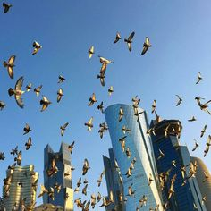 Good Morning #Doha #Qatar @mmuslim