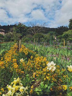 Claude Monet, Vineyard, Mountains, Gallery, Garden, Nature, Plants, Travel, Outdoor