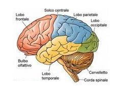 CRESCITA REIKI : Ringiovanire il cervello con la respirazione