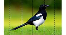 Ptáci na podzim - skládačky Blue Jay, Picasso, Puzzle, Birds, Education, Animals, Biology, Puzzles, Animales