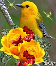 Flowers Gif, Beautiful Rose Flowers, Beautiful Flowers Wallpapers, Beautiful Nature Wallpaper, Beautiful Butterflies, Beautiful Birds, Animals Beautiful, Good Morning Beautiful Gif, Good Morning Gif