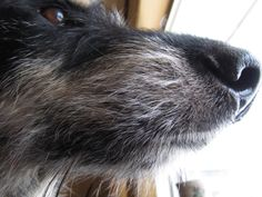 Can you count all my whiskers? #dog